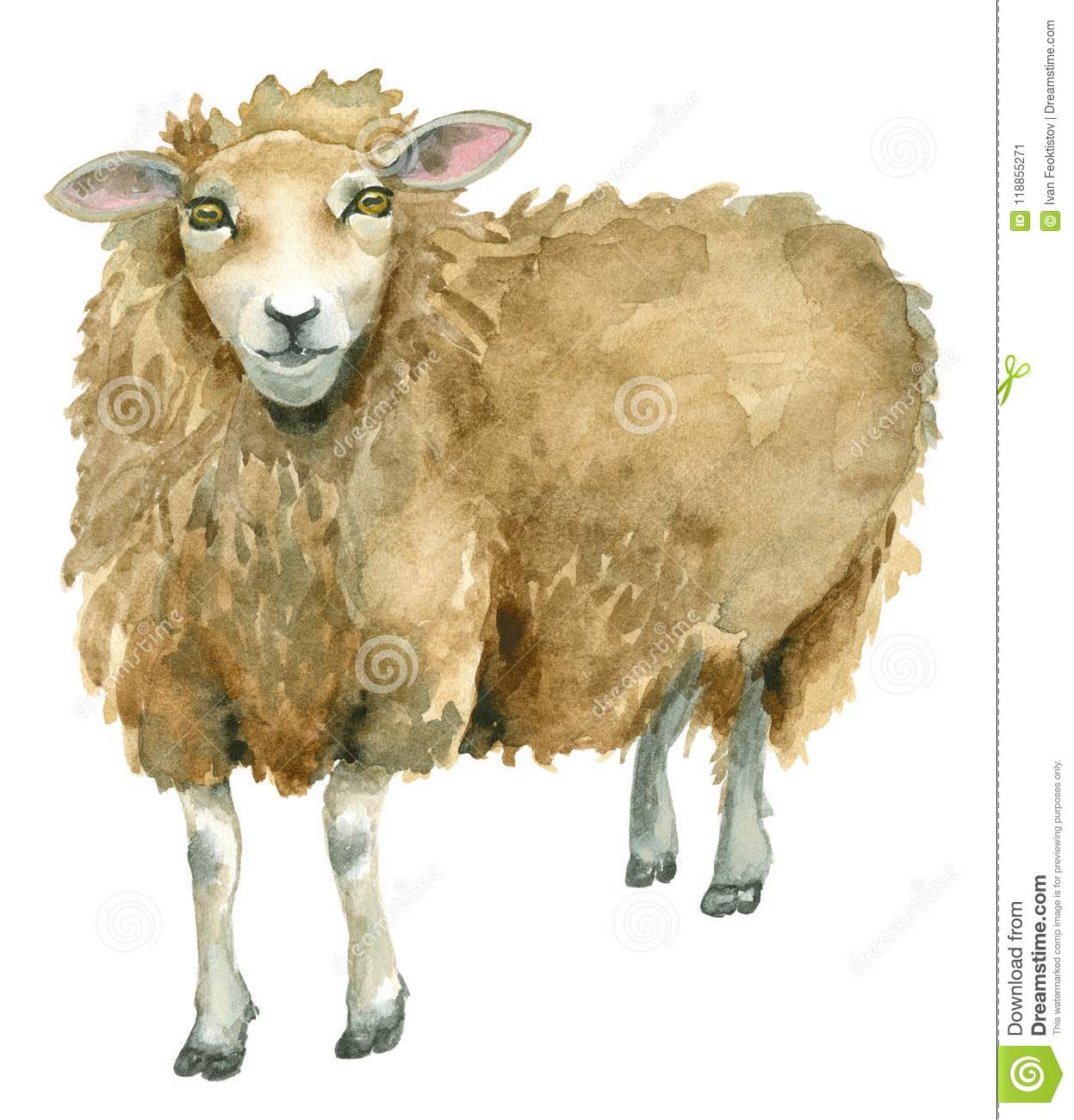 Watercolor Sheep Print Stock Illustration Illustration Of Graphic