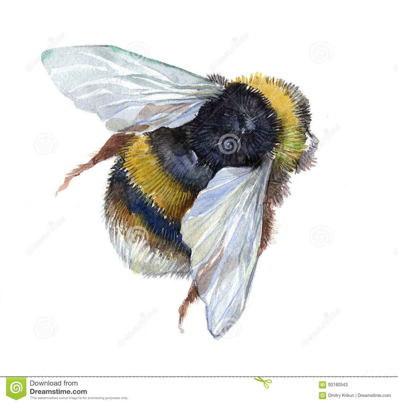 Watercolor Single Bumblebee Insect Animal Stock ...