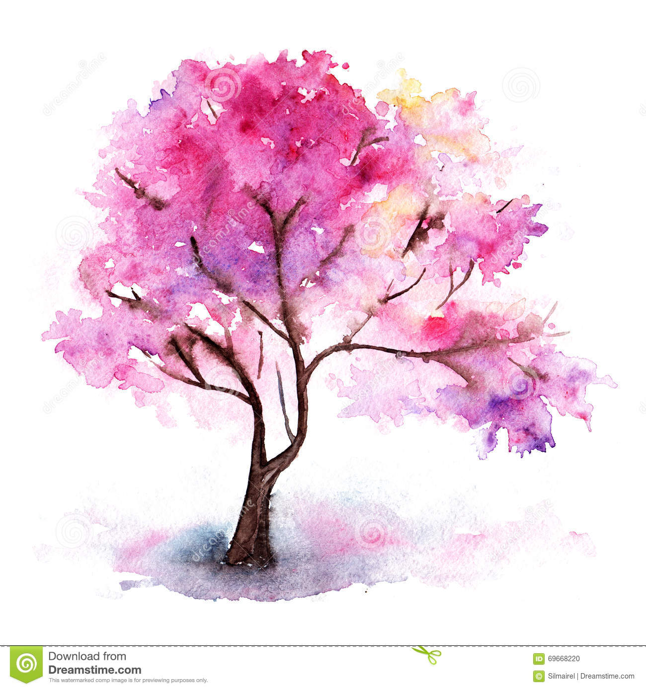 hispanic single men in cherry tree The wild cherry tree is  wild cherry scientific name: prunus avium  enjoy beautiful blossom and bright summer fruits by planting wild cherry single trees and.