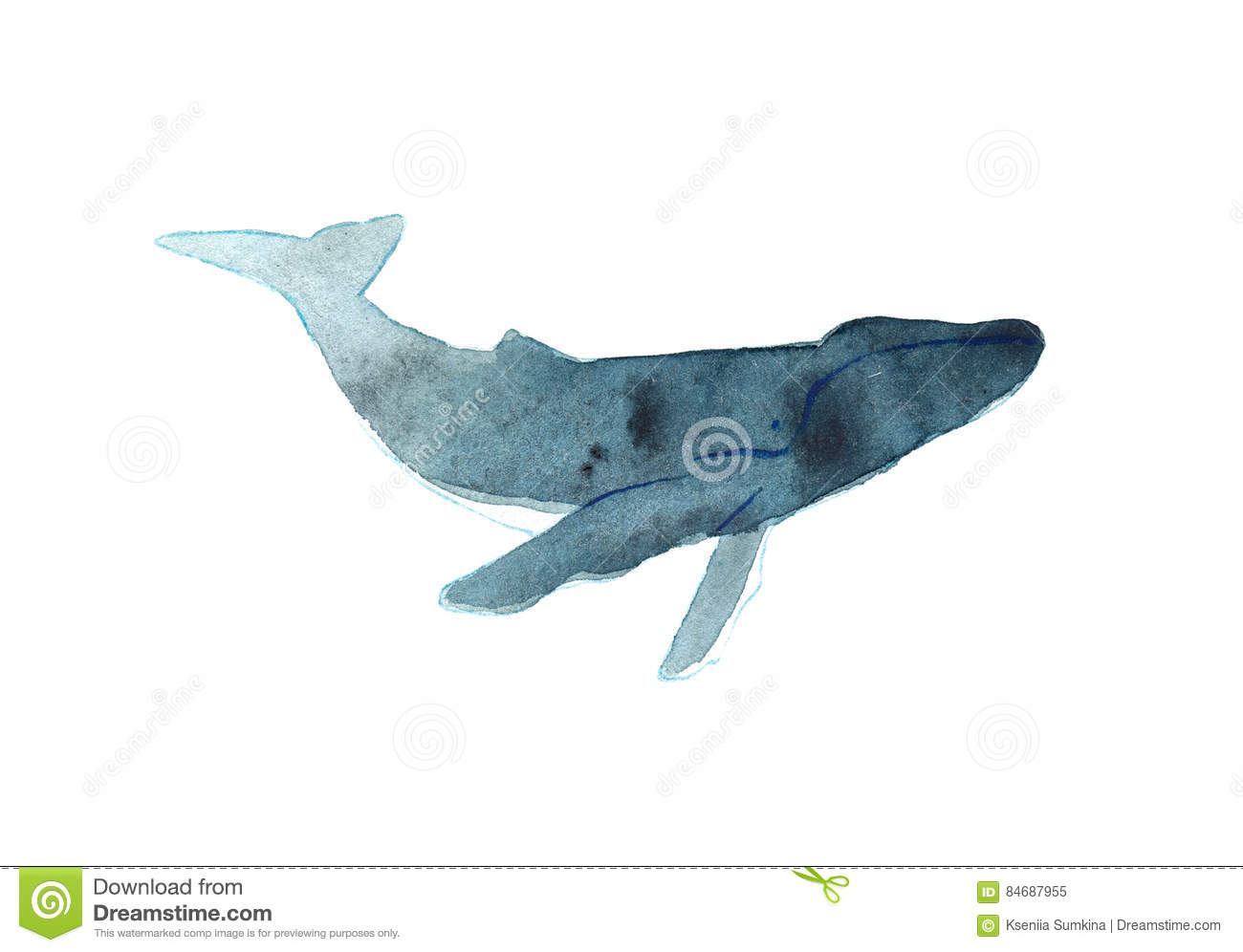 watercolor sketch of humpback whale illustration isolated on