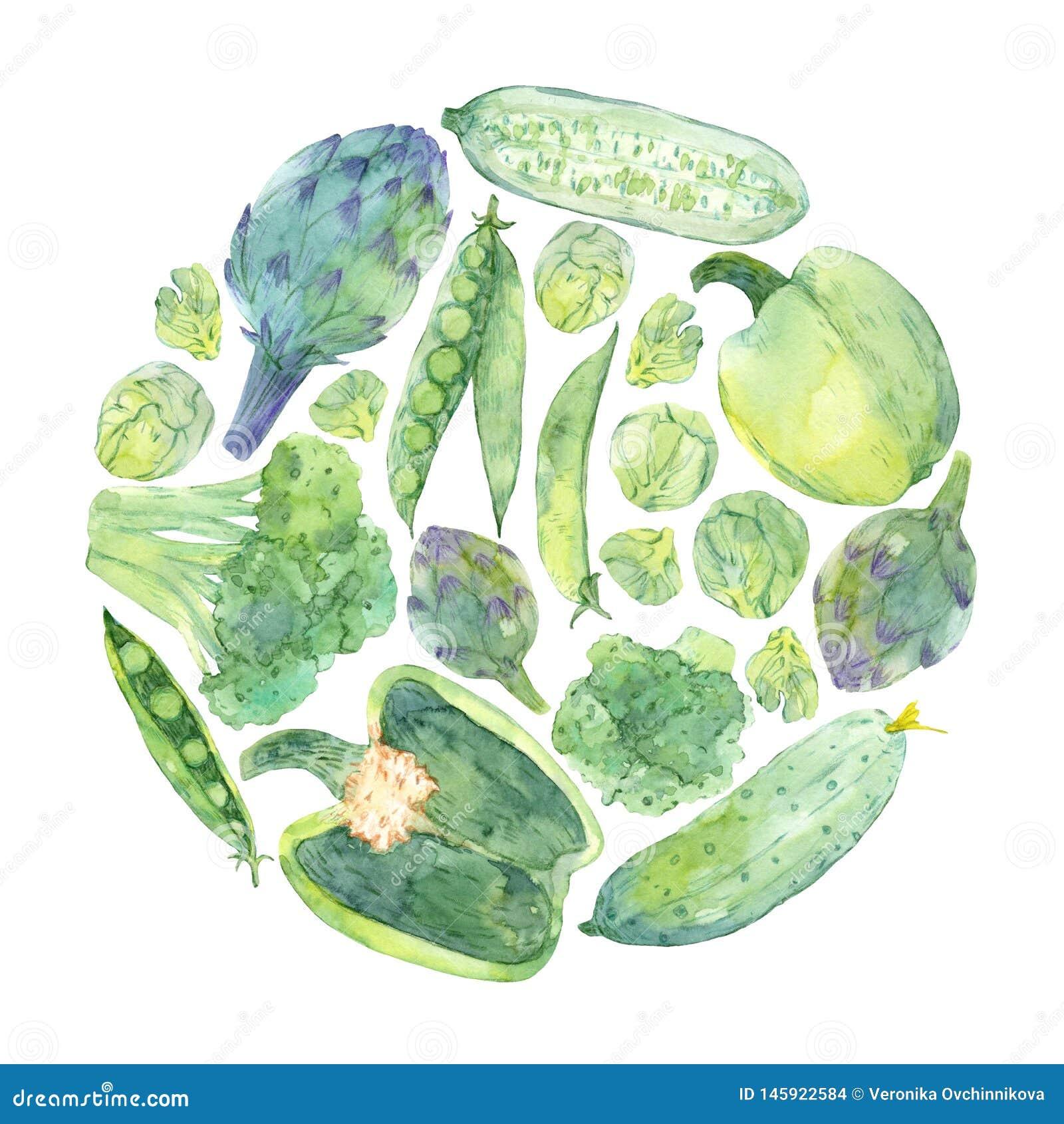 Watercolor sketching of fresh green vegetables in circle