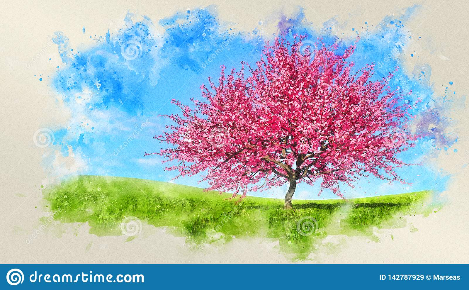 Watercolor Spring Landscape With Cherry Blossoms Stock