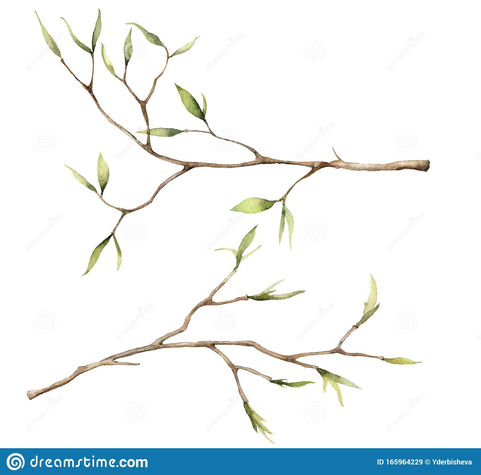 Watercolor Spring Set With Branches For Easter Hand Painted Tree Thin Branches And Buds Isolated On White Background Stock Illustration Illustration Of Forest Season 165964229