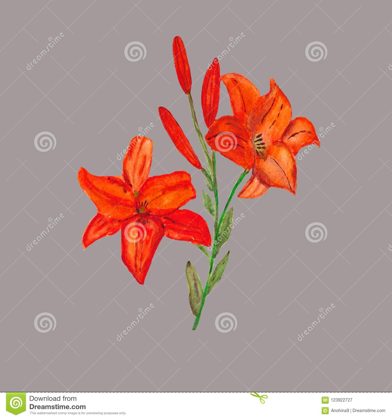Watercolor. A Square Frame Of Red Lilies On A Gray Background. Stock ...