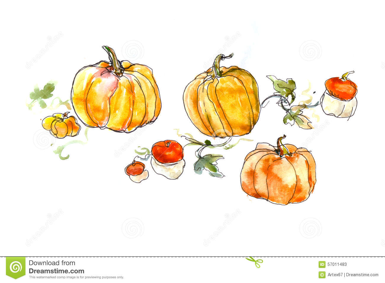Watercolor Still Life Of A Pumpkin With Leaves Stock
