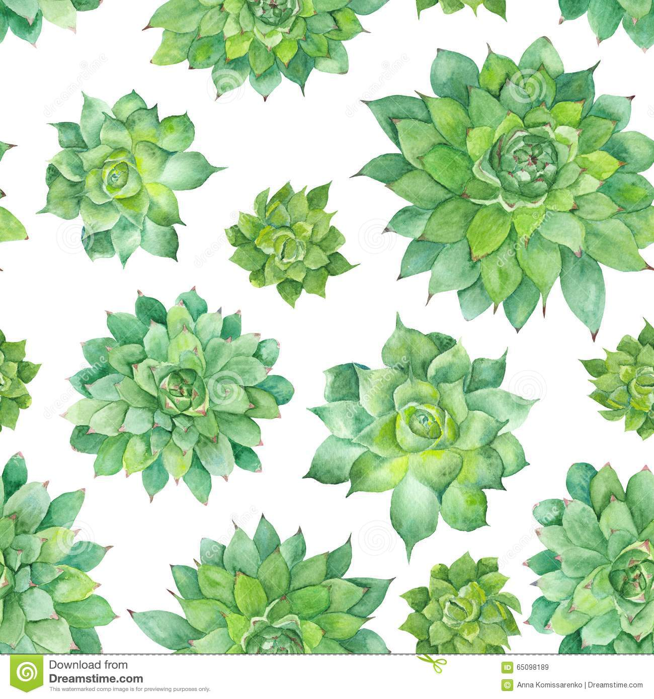 Watercolor Succulent Pattern On White Background Stock Illustration Illustration Of Graphic Succulents 65098189