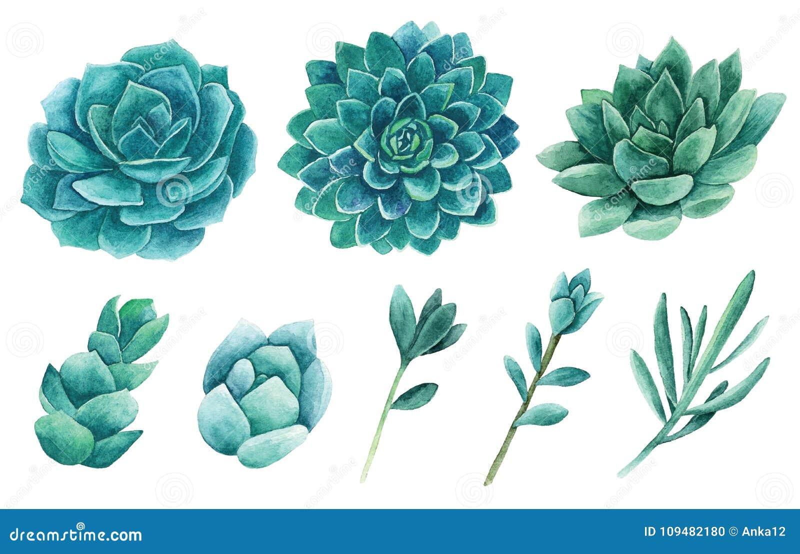 Watercolor succulents vector clip art. Green cactus clipart