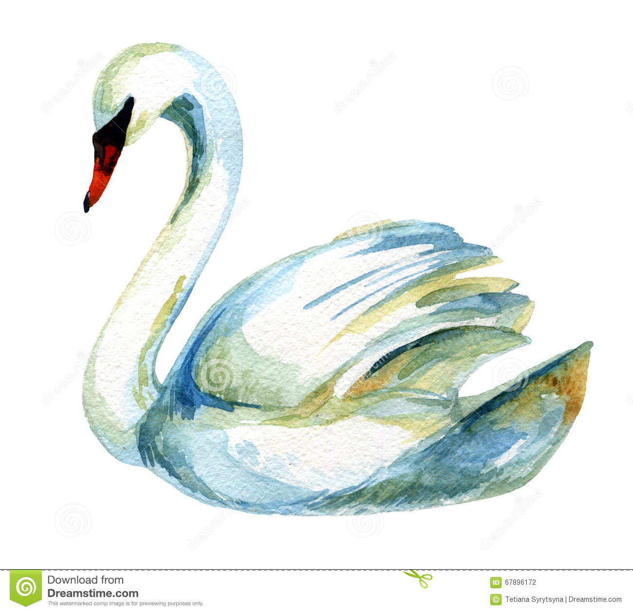watercolor swan stock illustration image of ideal  drawn 67896172 love birds clipart wedding love birds clip art image