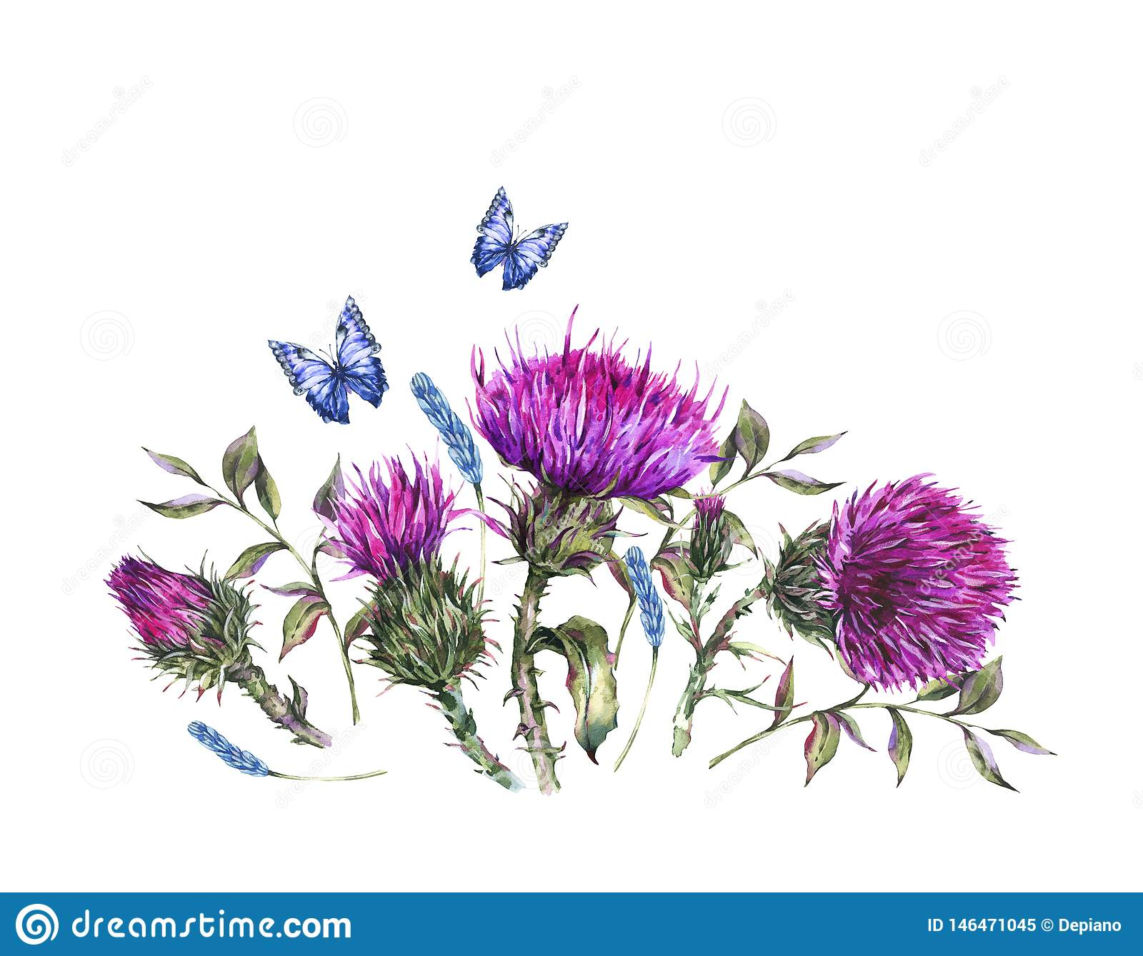 Watercolor thistle, blue butterflies, wild flowers illustration, meadow herbs vintage greeting card