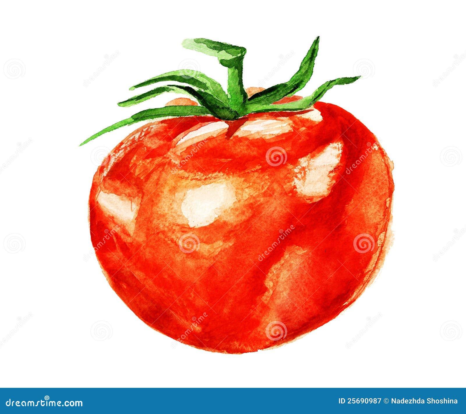 Watercolor tomato Roya...