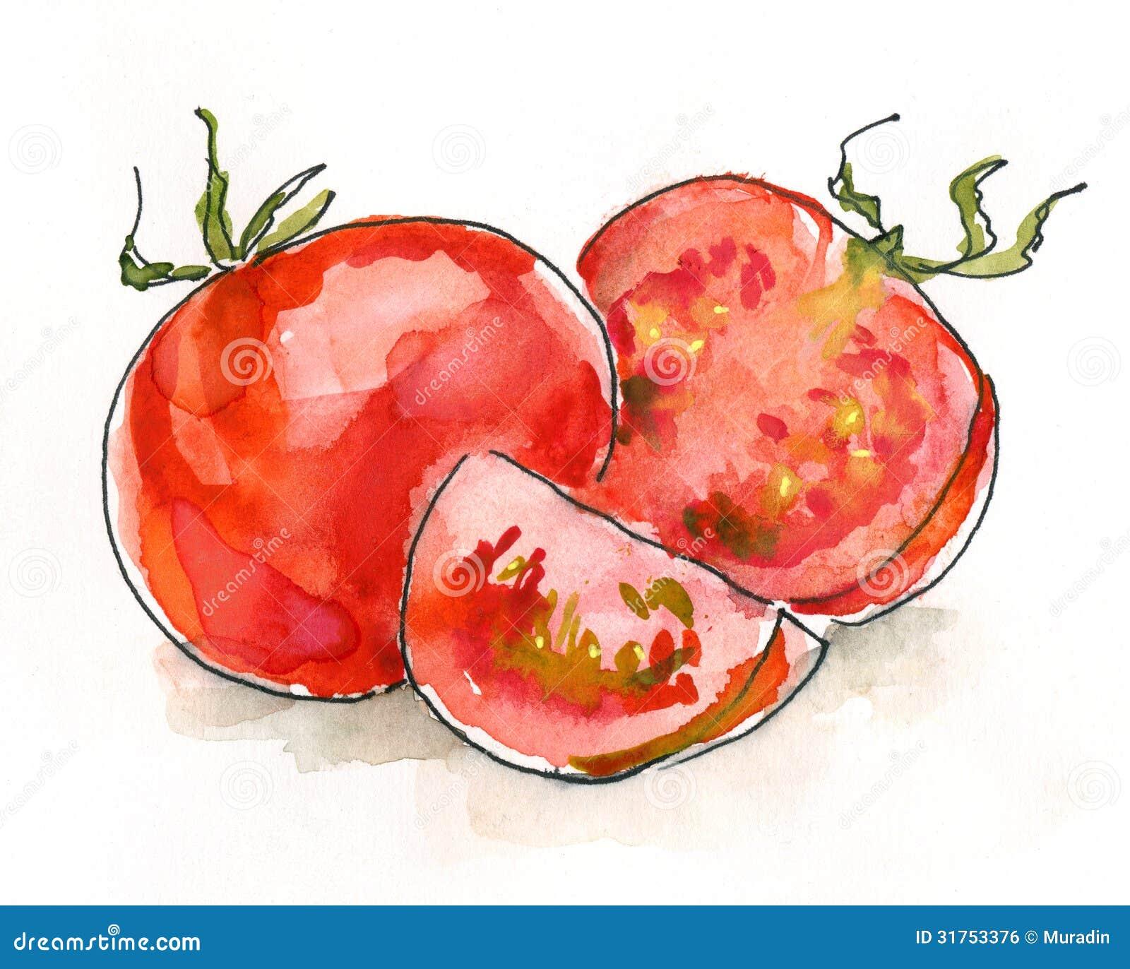 Watercolor tomatoes Ro...
