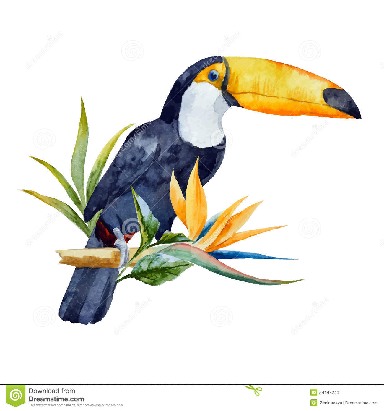 watercolor toucan stock vector illustration of painting