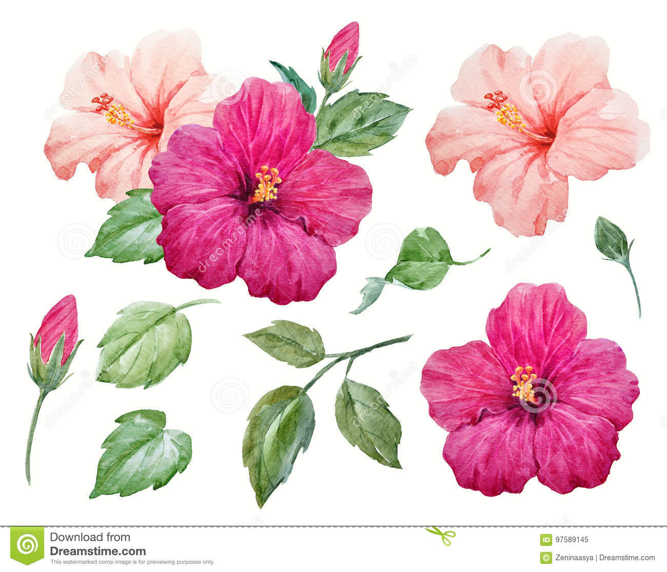 Watercolor Tropical Hibiscus Flower Stock Illustration