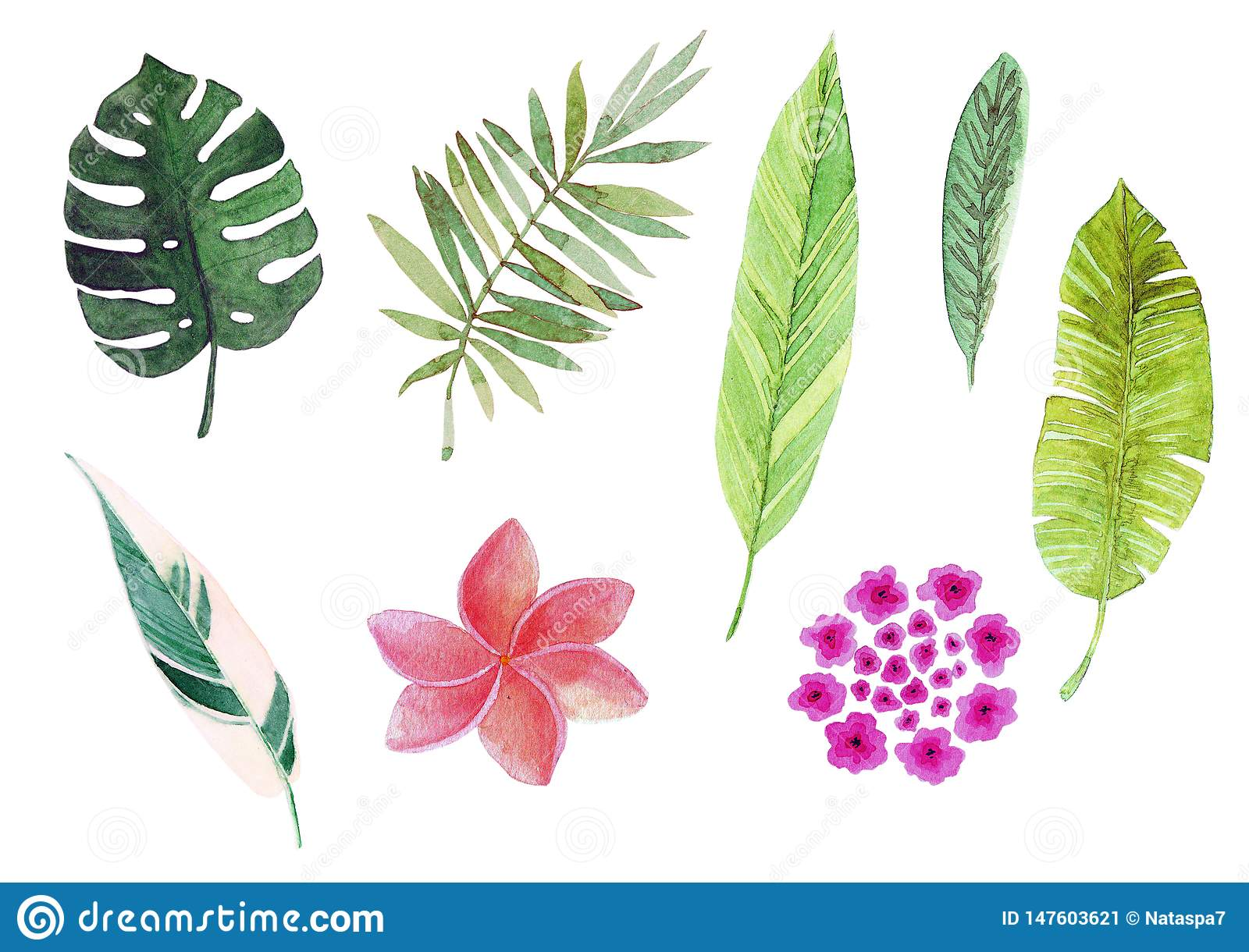 Watercolor tropical leaves and flowers.