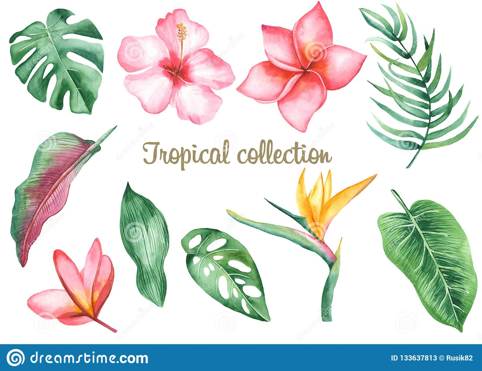 Watercolor Tropical Leaves And Flowers Stock Illustration Illustration Of Garden Flowers 133637813 Find & download free graphic resources for tropical flower. https www dreamstime com watercolor tropical leaves flowers watercolor tropical leaves flowers banana monstera plumeria protea heliconia hibiscus image133637813