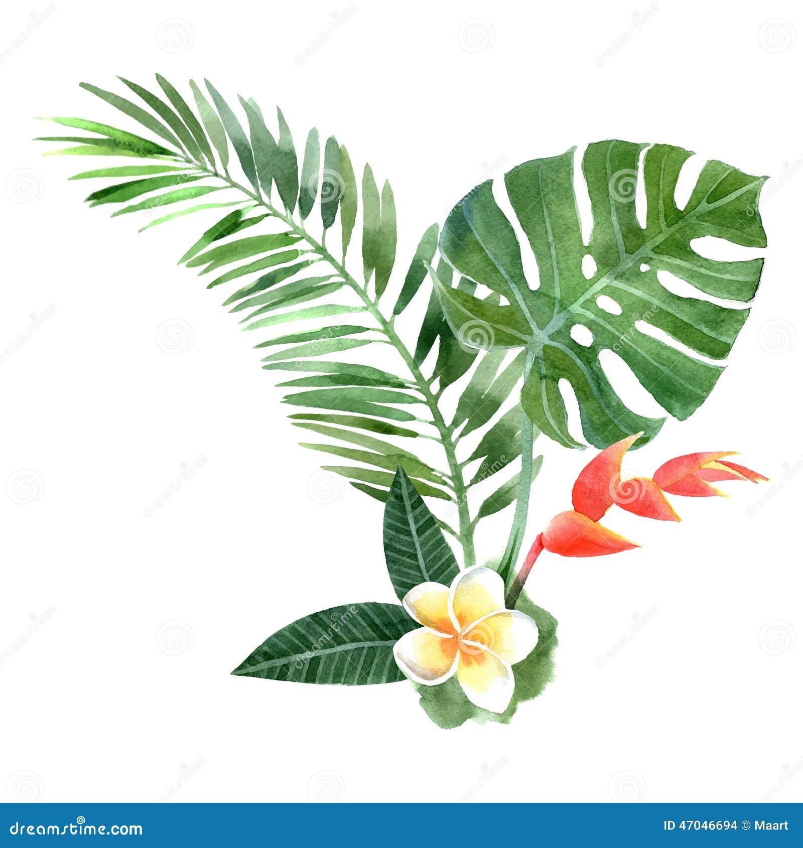 Watercolor Tropical Plants Stock Vector Image 47046694