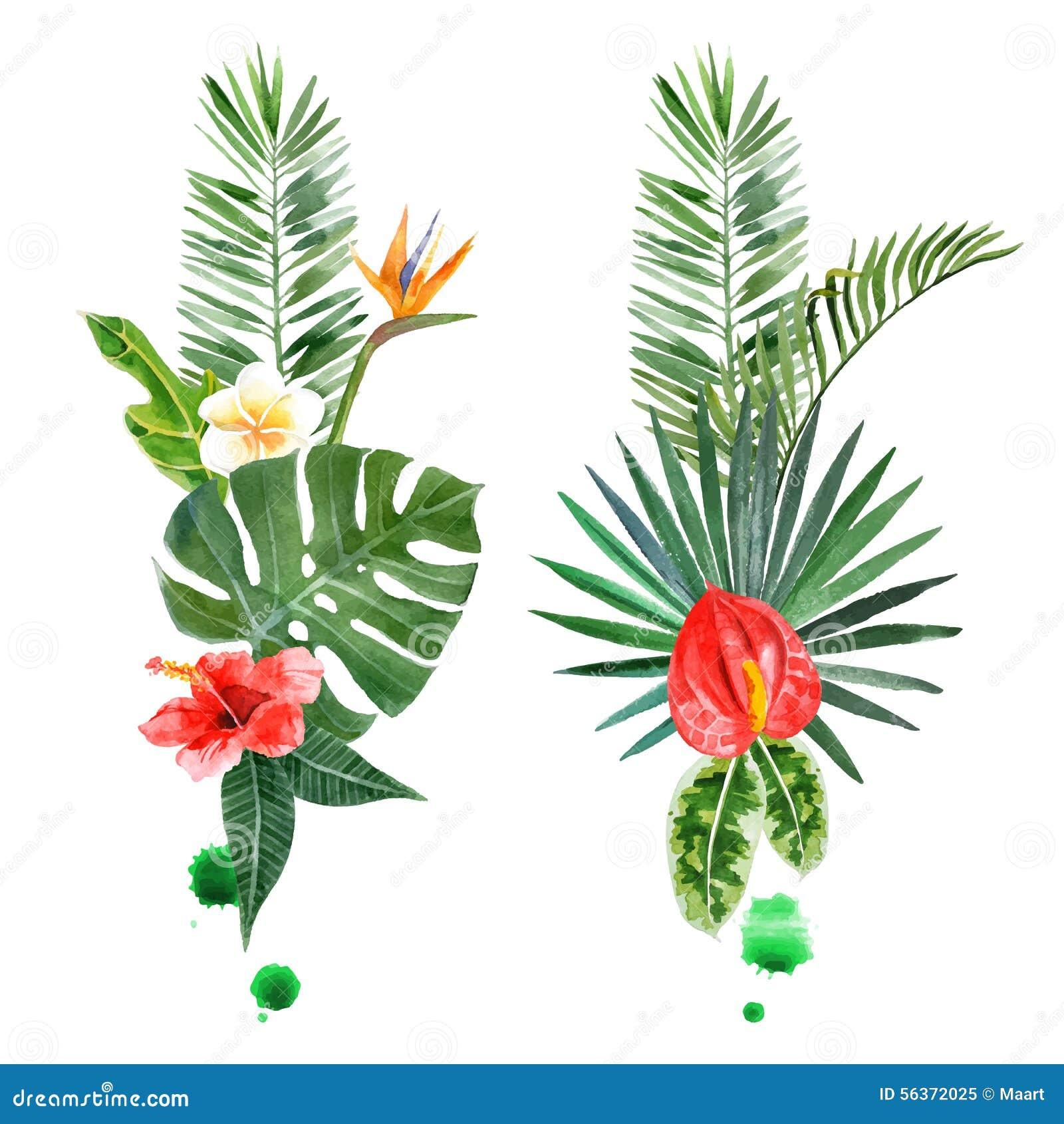 Tropical Plants Cartoon Vector 70031221