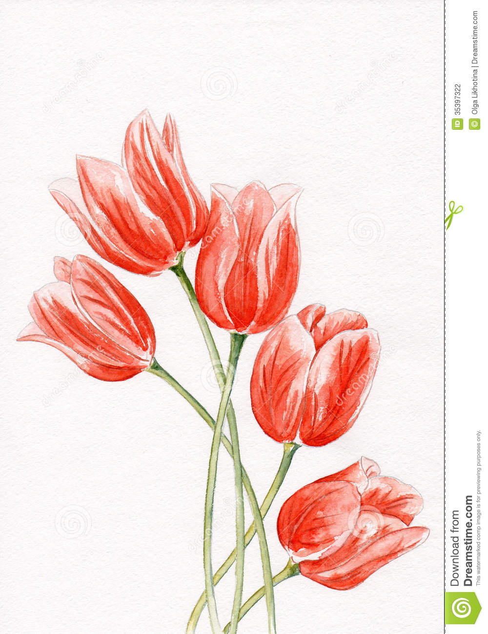 Beautiful pink flowers in the garden stock photography image - Watercolor Tulips Stock Photography Image 35397322