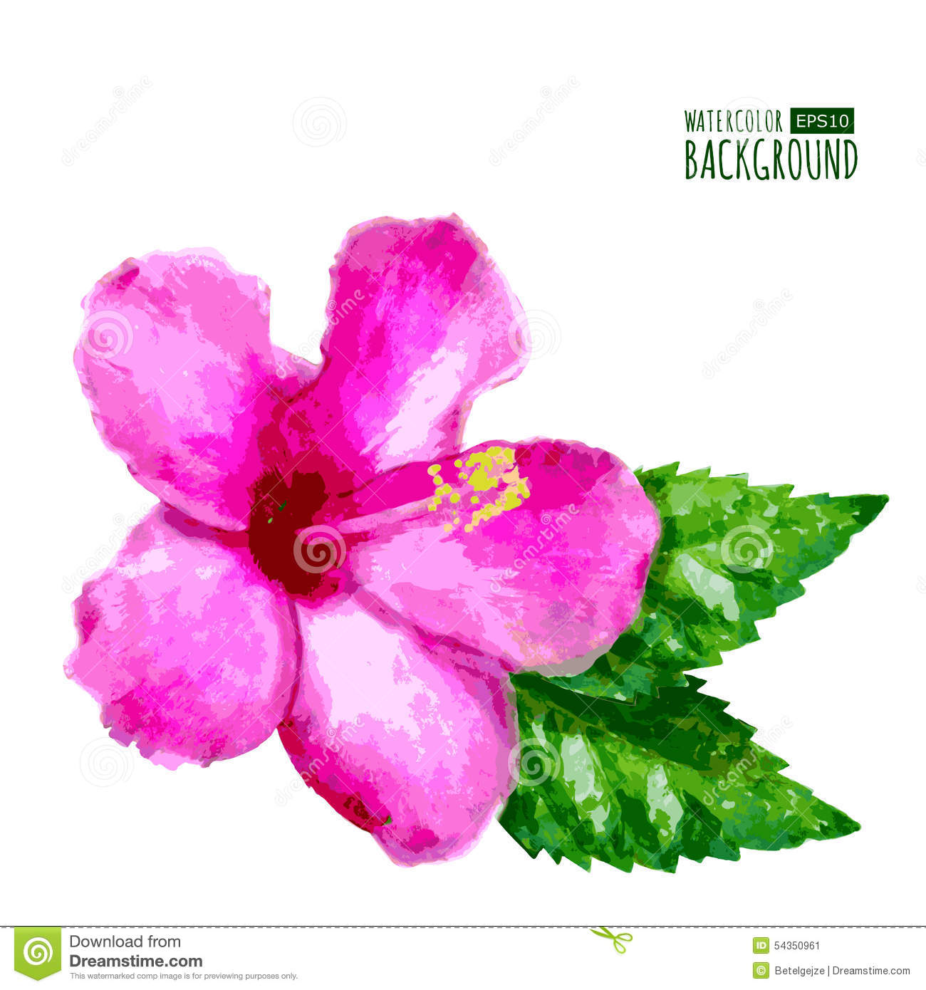 Watercolor Pink Hibiscus Flower Stock Vector Illustration Of