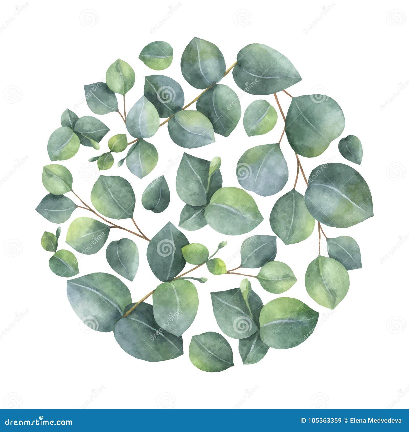Watercolor vector card with green eucalyptus leaves and branches watercolor vector card with green eucalyptus leaves and branches m4hsunfo
