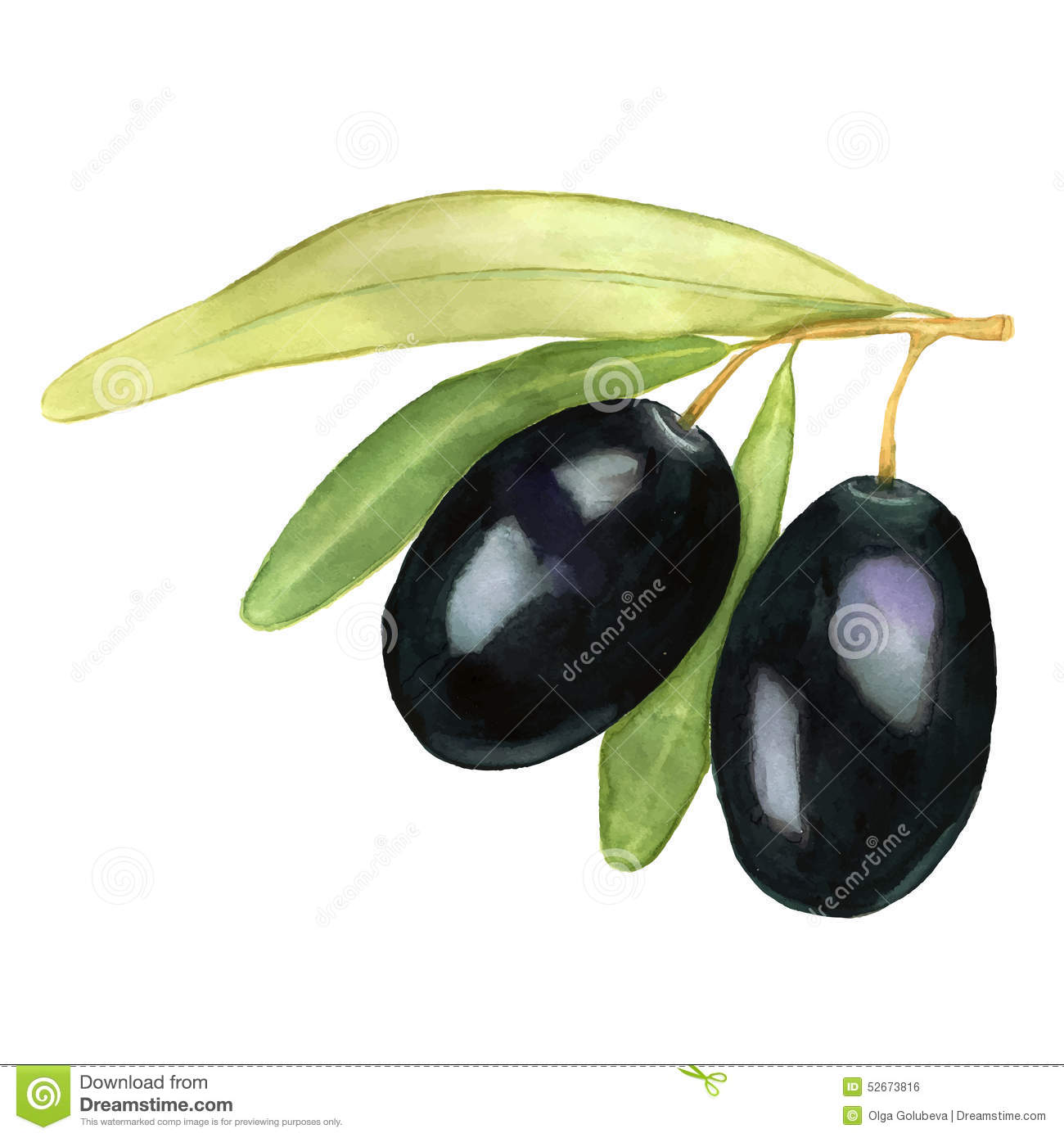 Watercolor vector illustration of two black olives