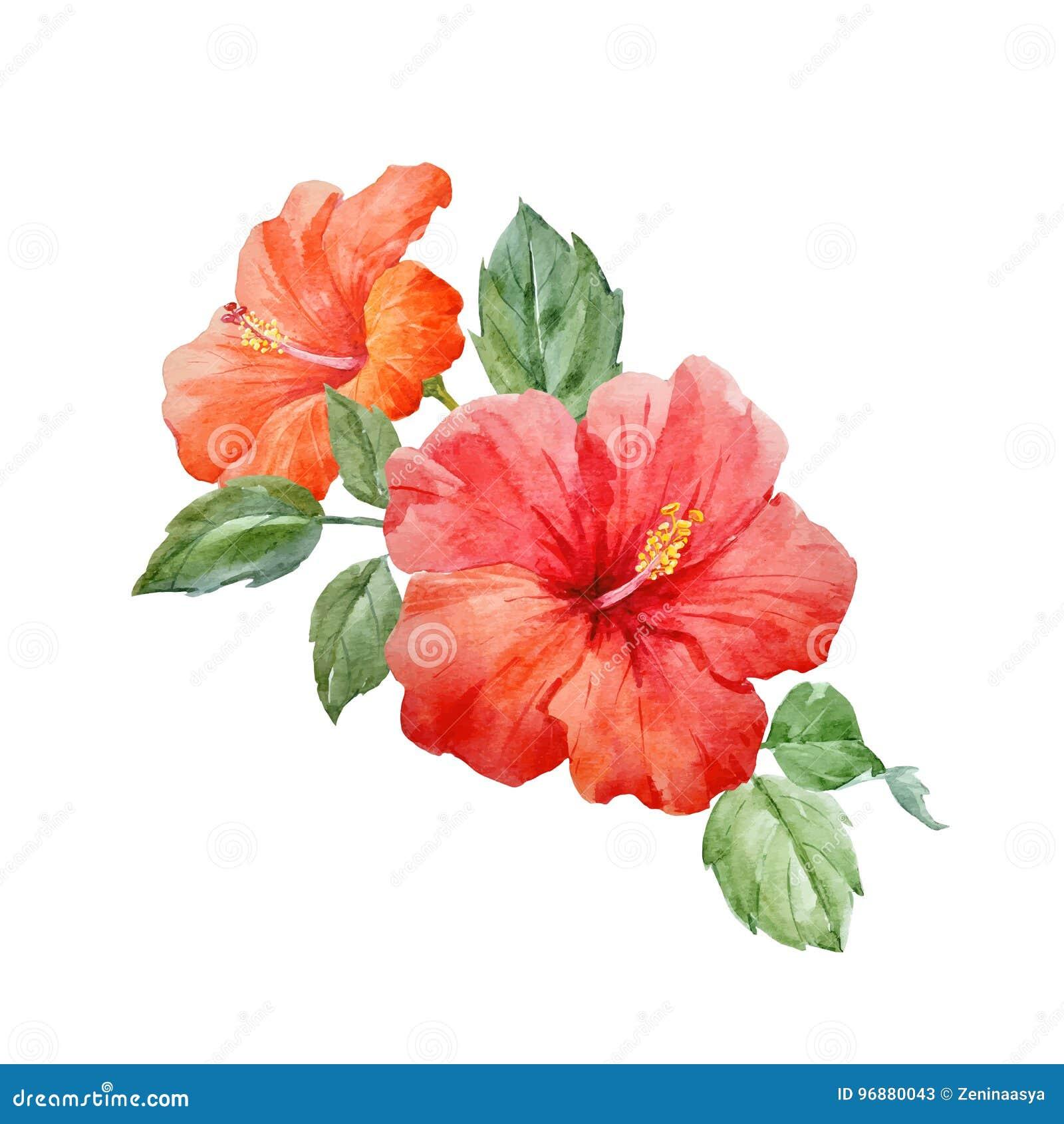 Watercolor vector tropical hibiscus flower stock vector beautiful vector watercolor hand drawn tropical hibiscus flower illustration on transparent background izmirmasajfo
