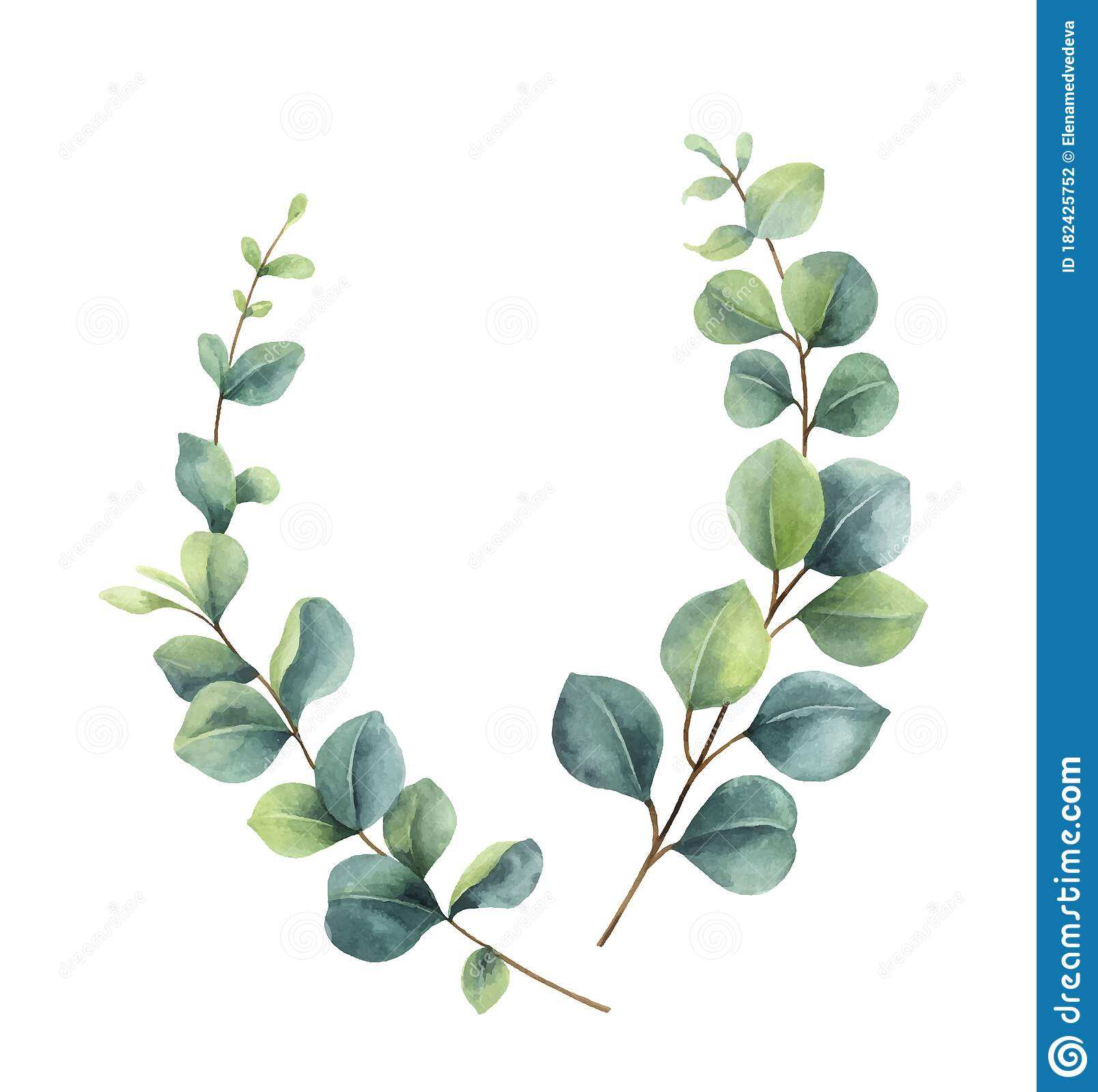Watercolor Vector Wreath With Green Eucalyptus Leaves And Branches ...