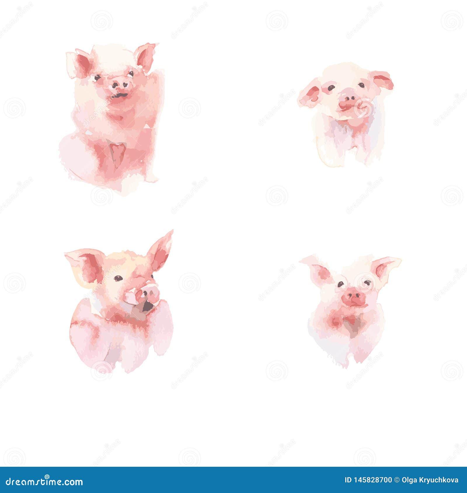 Watercolor vectors collection of little piggy. A variety of little piggy design.