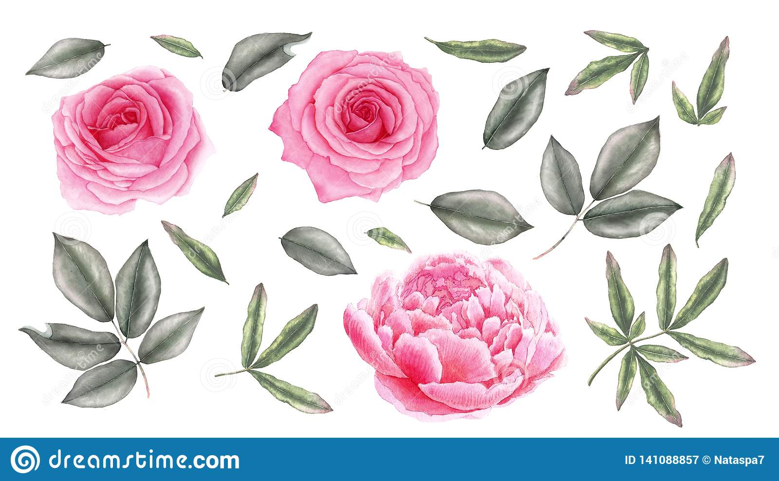 Watercolor vintage pink rose, peony flowers and leaves