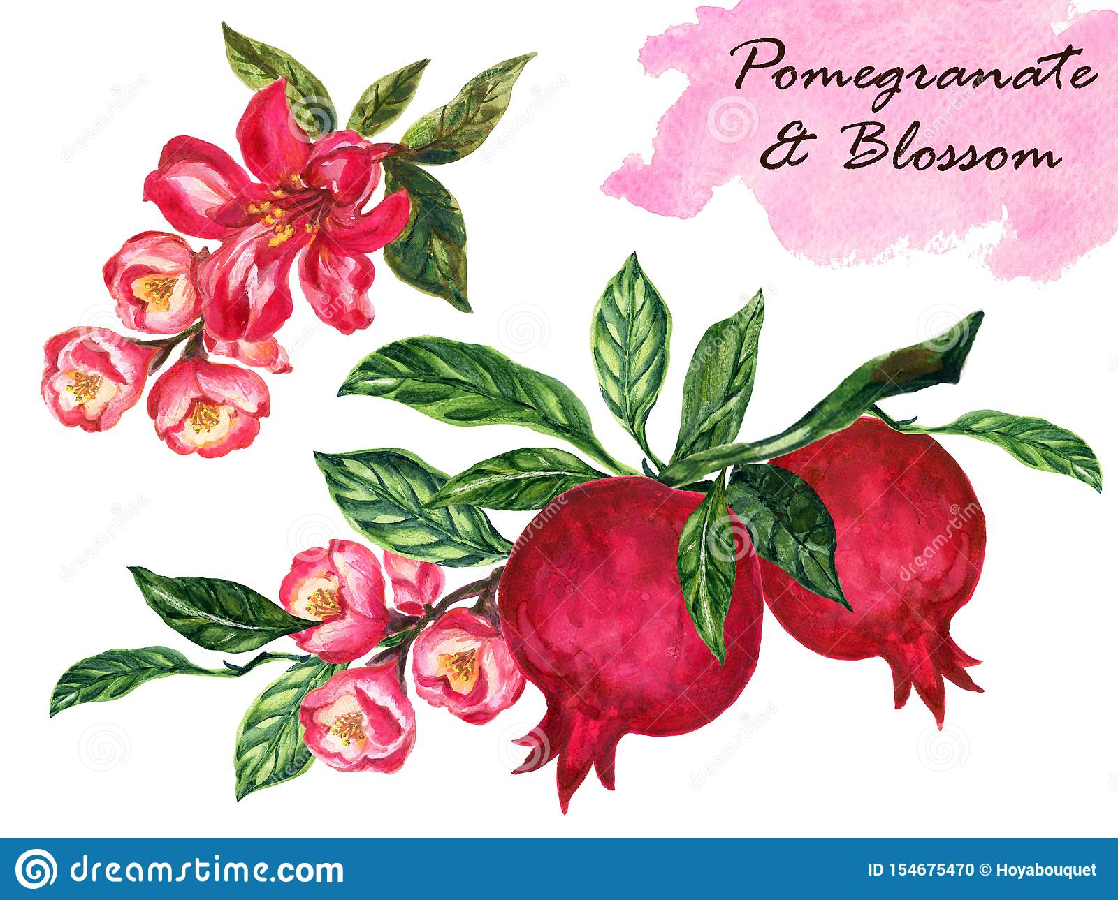 Watercolor Vintage Pomegranate With Branch Foliage Composition Pomegranate Tree Isolated On White Background Botanical Stock Illustration Illustration Of Bloom Fruit 154675470