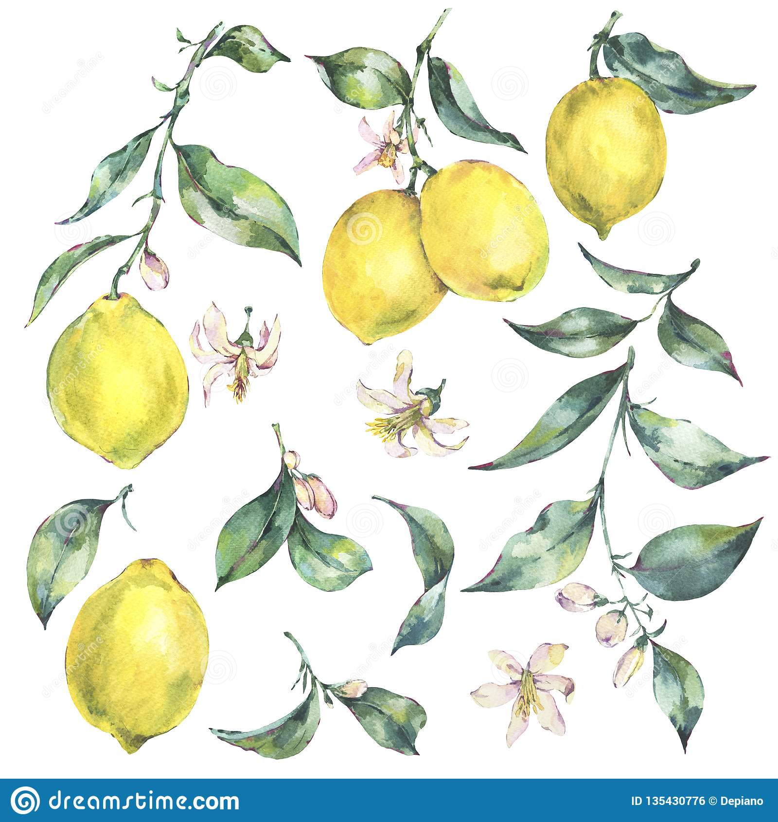Watercolor vintage set of branch yellow fruit lemon
