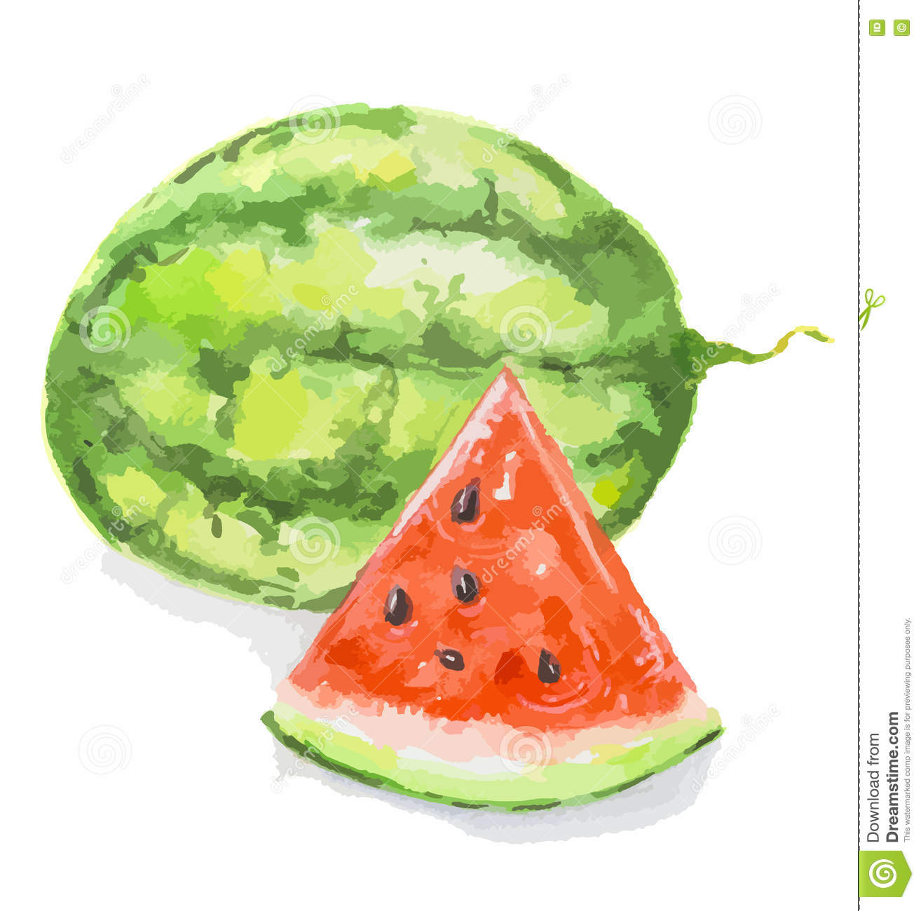 watercolor watermelon.