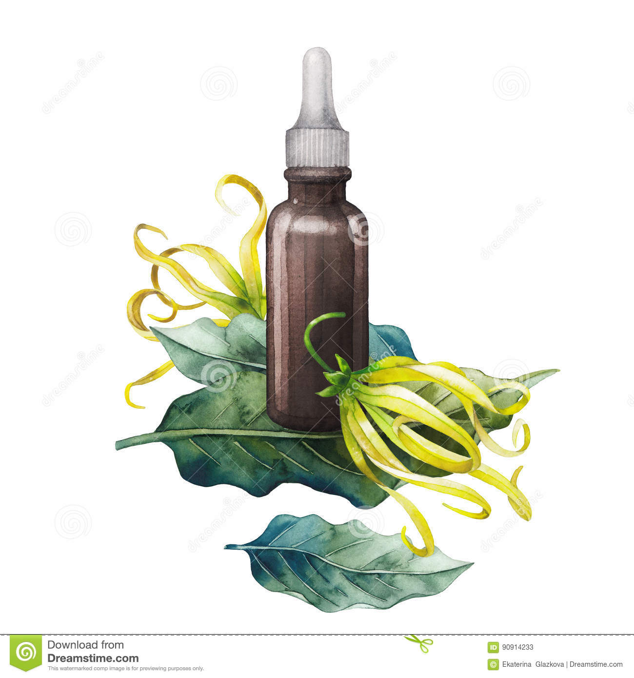 Watercolor ylang ylang oil stock illustration illustration of watercolor ylang ylang oil frankincense perfumery mightylinksfo