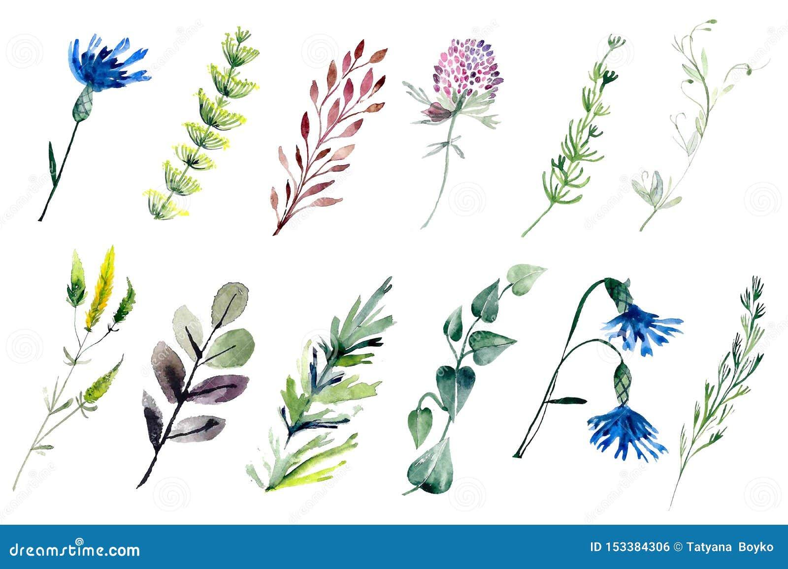 Watercolour field plants