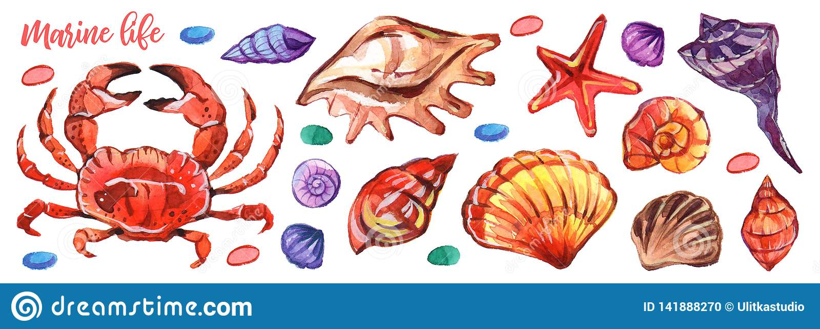 Watercolour marinho no estilo realístico no fundo branco Vida subaquática marinha Branco isolado ilustração