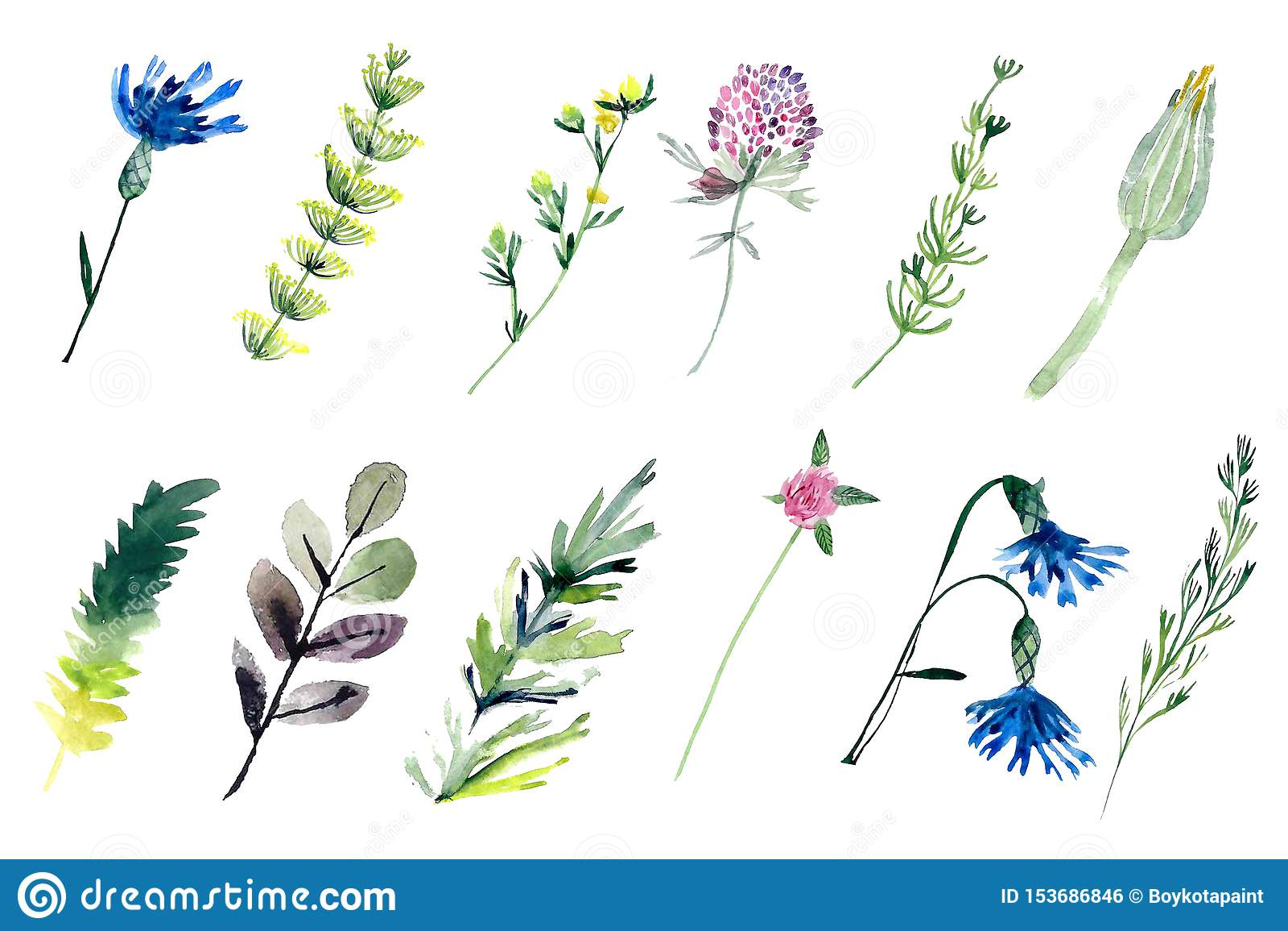 Watercolour pola rośliny