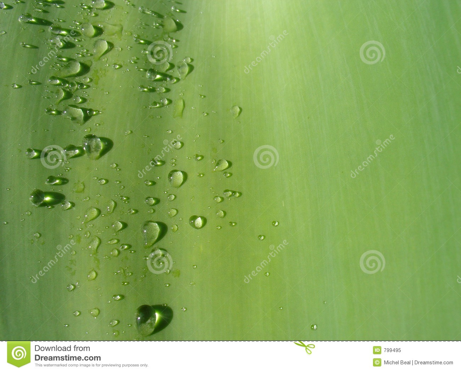 Waterdrop liści