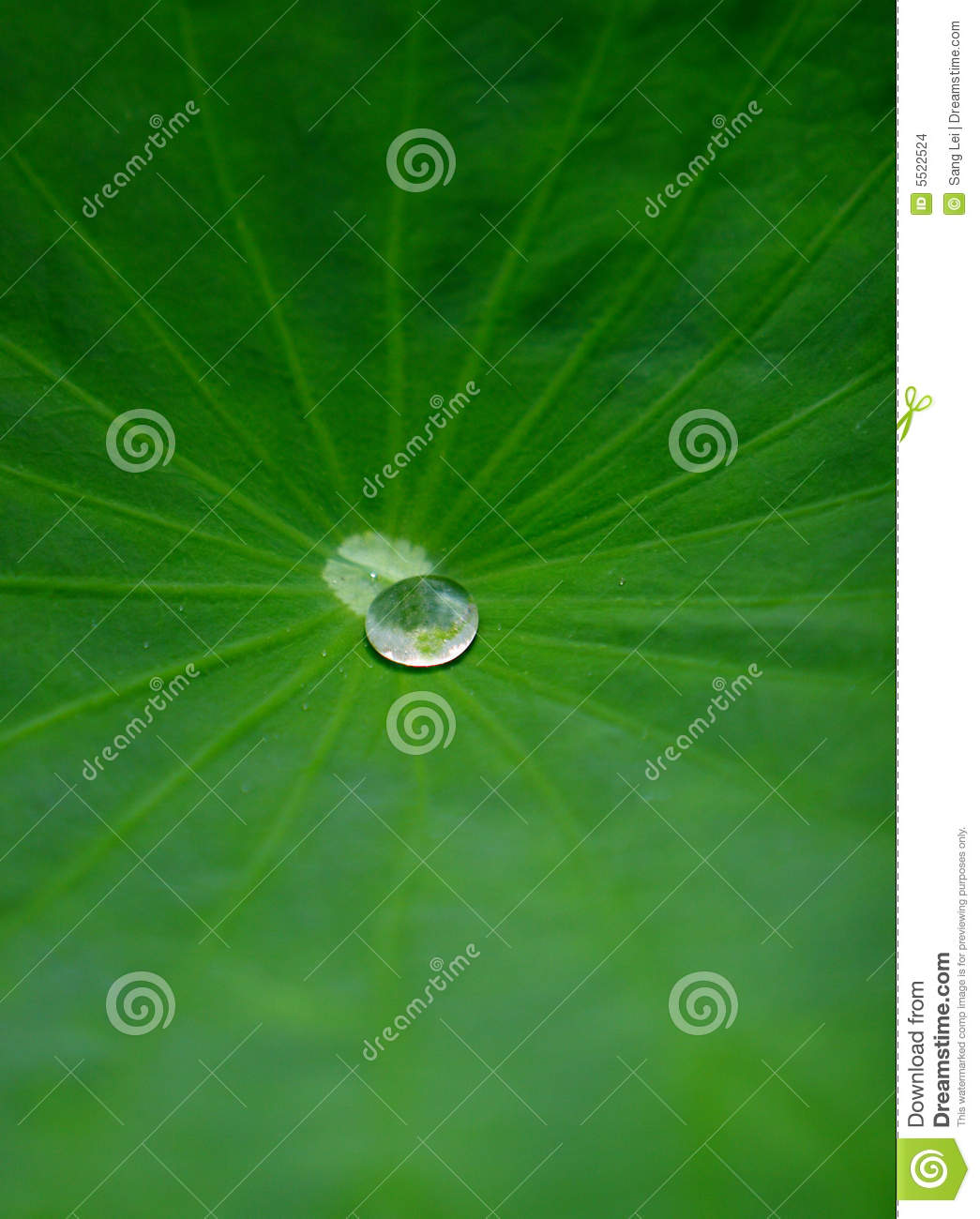 Waterdrop on lotus leaf