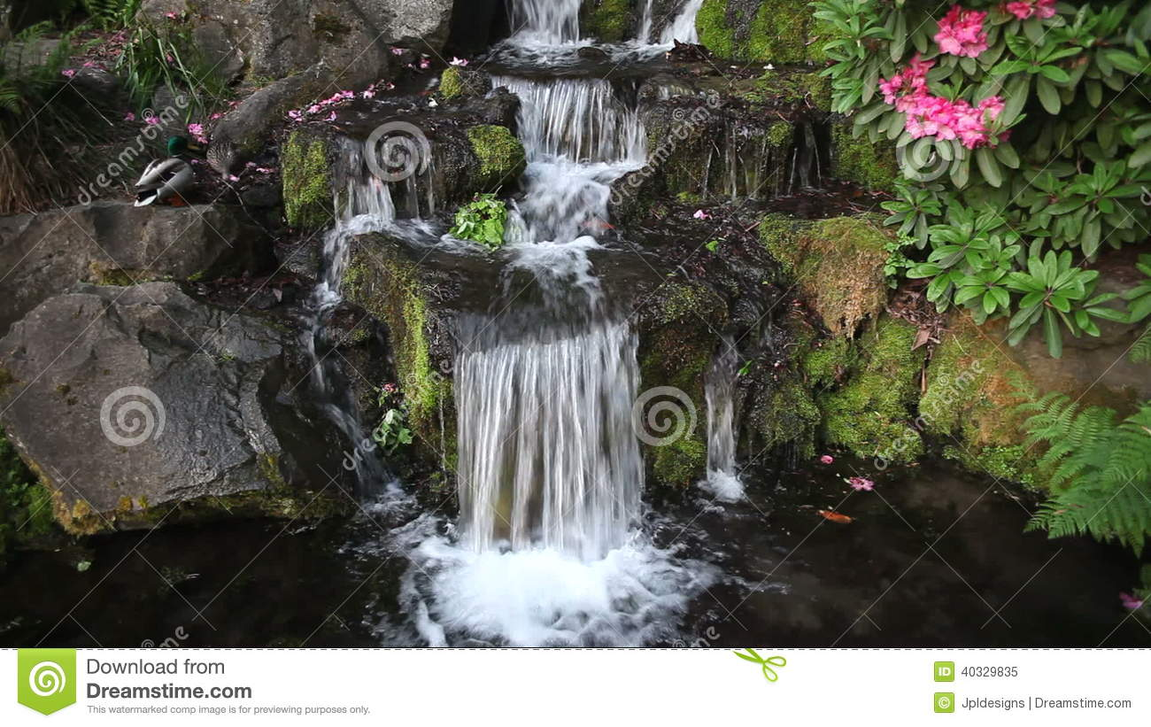 waterfall in backyard with rhododendron blooming and ducks bathing