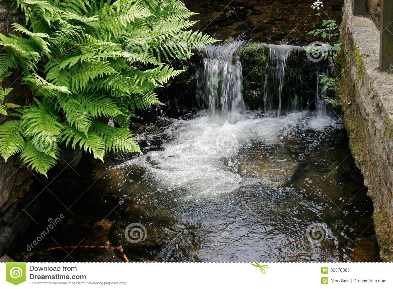 Waterfall and ferns royalty free stock photo image 30370805 for Green water in pond