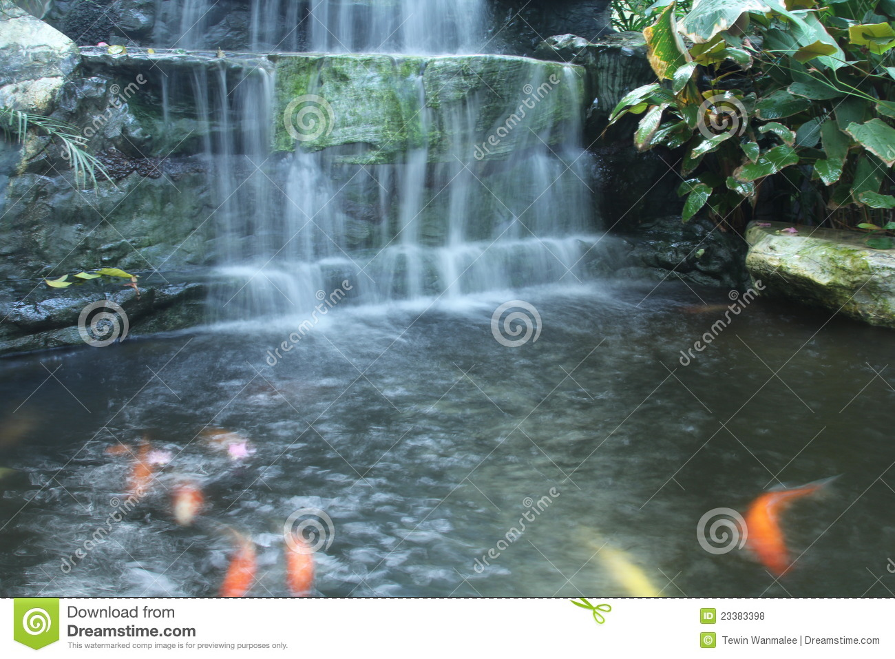 Waterfall over the fancy carp pond royalty free stock for Carp pond design