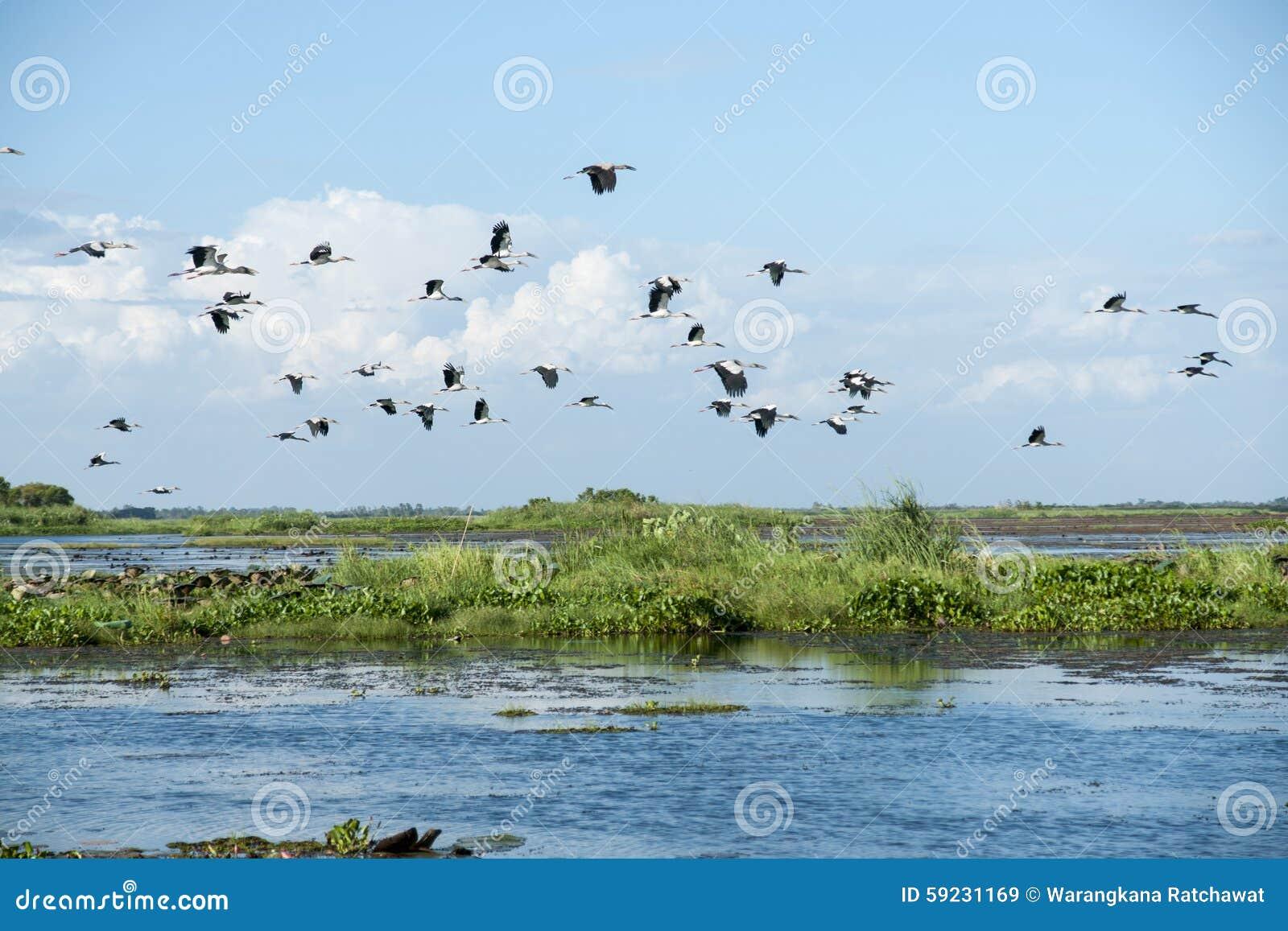 Download Waterfowl imagen de archivo. Imagen de animal, multitud - 59231169