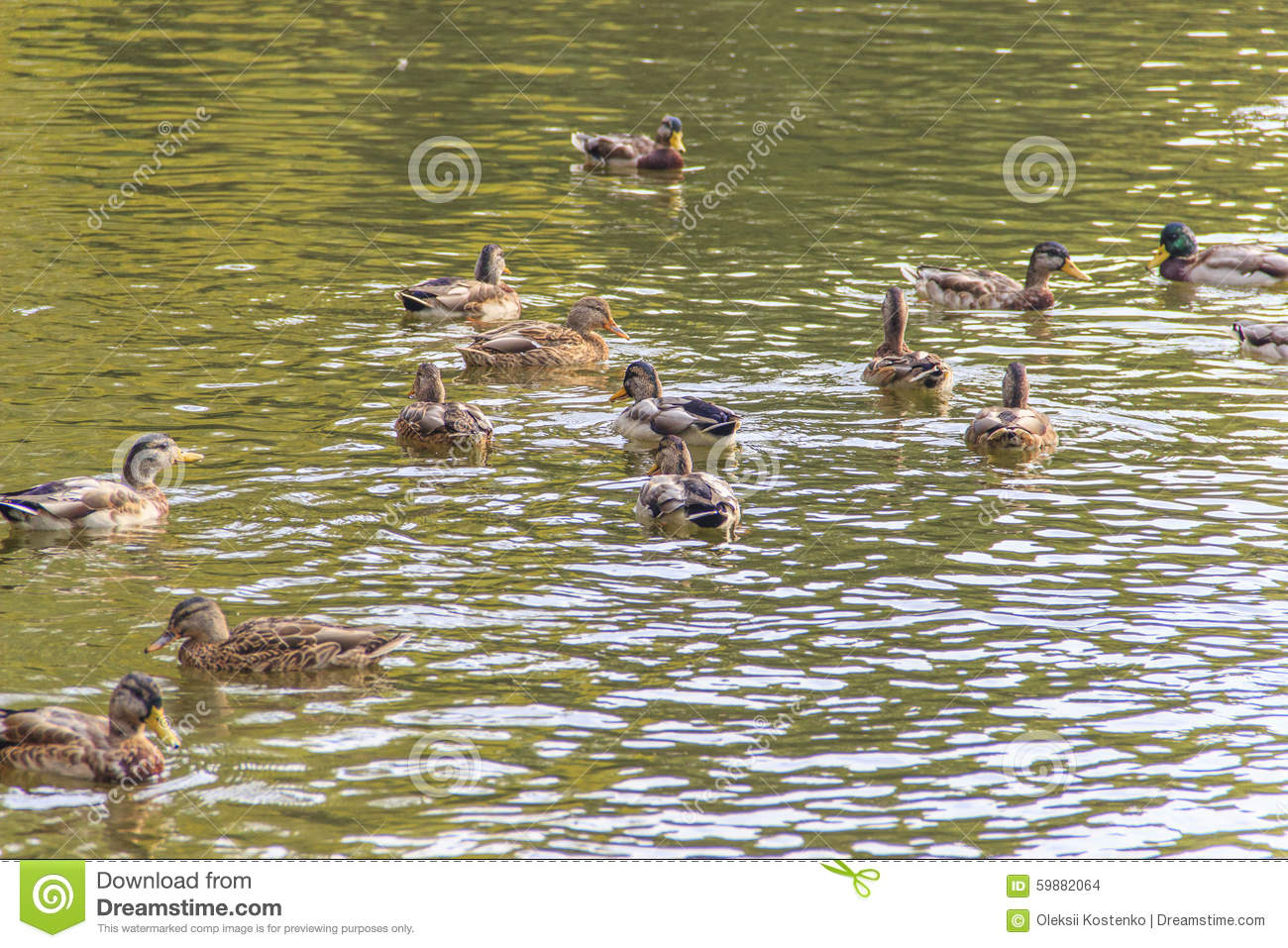 Nature Parks  With Ducks