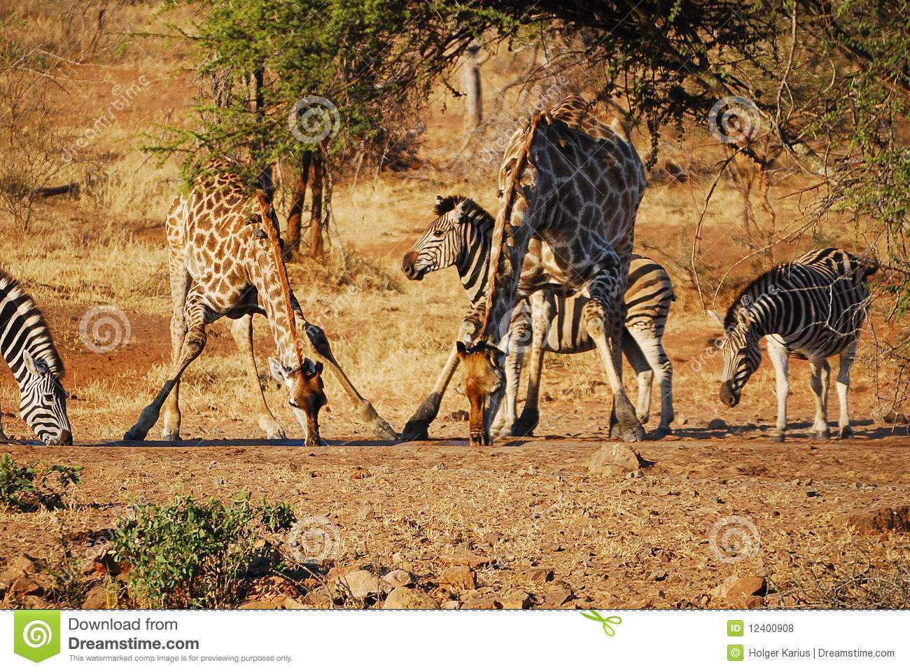 At the waterhole (South Africa)