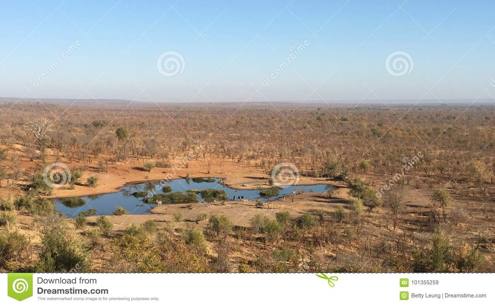 Waterhole voor dieren dichtbij Victoria Falls Safari Lodge in Zimbabwe