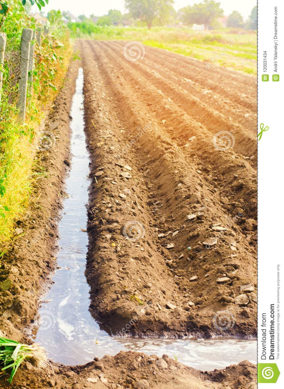 Watering Of Agricultural Crops, Countryside, Irrigation
