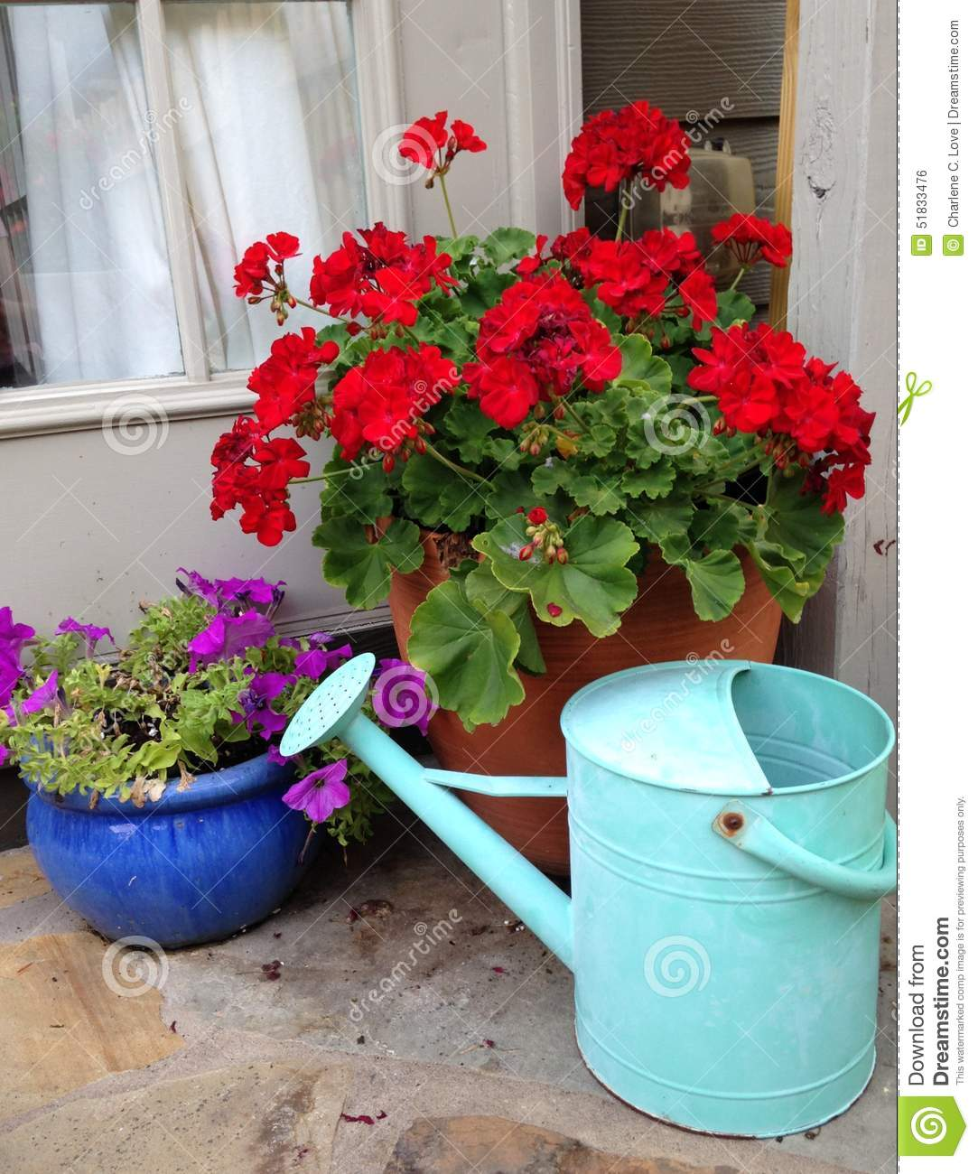 Watering can and flowers stock photo image 51833476 - Care geraniums flourishing balcony porch ...