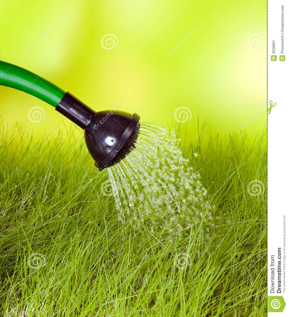 Watering Can And Grass Stock Image Image 9528931