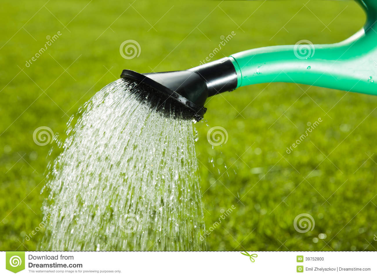 Watering Can And Grass Stock Photo Image 39752800