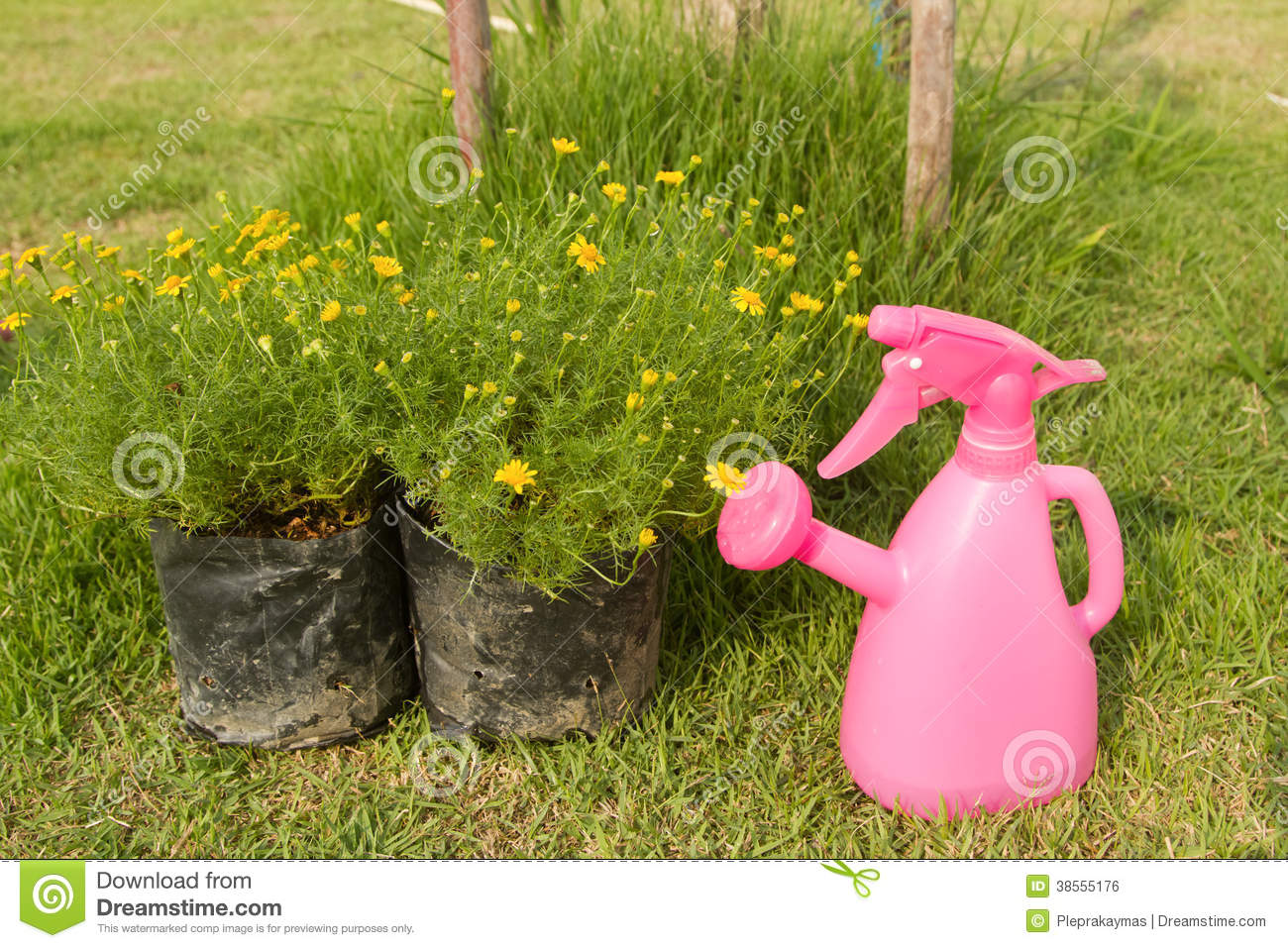 Watering can and plant in flower bag